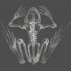 Chills & Thrills- Frog Chalk Skeleton Stamp 2
