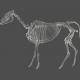 Chills & Thrills - Animal Chalk Skeleton Stamp 2