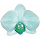 Unwind Mini Kit- Teal Orchid