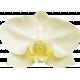 Unwind Mini Kit- Yellow Orchid