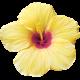 Unwind Mini Kit - Yellow Hibiscus