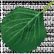 Spring Day- Leaf