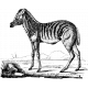 Animal Stamp Template 024