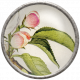 Apple Crisp- Apple Blossom Brad 02