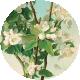 Apple Crisp- Apple Blossom Brad Disk 03