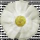 Elegant Autumn- White Flower