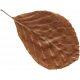 Day of Thanks- Brown Leaf