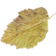 Day of Thanks- Yellow Leaf 02