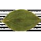 Fall Into Autumn- Dried Leaf