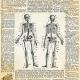Chills & Thrills- Skeleton Paper