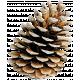 The Nutcracker- Pinecone