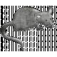 Nutcracker Doodle- Mouse