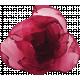 Nutcracker Red Flower