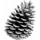 Pinecone Template 004