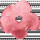 Look, A Book!- Pink Flower