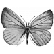 Insect Stamp Template 021