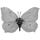 Butterfly Template 040