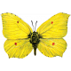 Reflections of Strength- Yellow Butterfly
