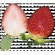 Strawberry Fields- Strawberry Photo 3