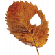 Falling For You-Brown Leaf 2