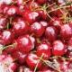 Cherry Mini Kit Paper- Cherry Pile