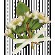 Country Wedding Leaf Cluster