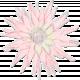 Gentle Blooms- Pink Watercolor-Painted Flower 02