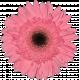 Flower Sept 2021 Blog Train