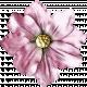 Valentine Grunge Flower #1
