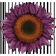 Renaissance Faire- flower 1