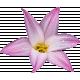 TAS_ Journal Thing_Flower