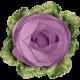 Garden Tales Elements - Cabbage Rose Flower