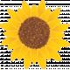 Petting Zoo Sunflower