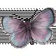 Elegant Autumn Butterfly