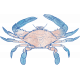 Coastal Spring Crab