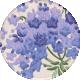 Lavender Fields Floral Sticker