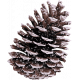 Frosty Forest Pinecone