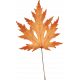 Copper Spice Orange Leaf