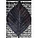 Copper Spice Purple Leaf