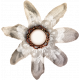 Autumn Bramble White Flower