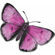 Better Together Butterfly