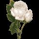 Rustic Wedding White Rose Flower