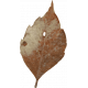Rustic Wedding Leaf 2