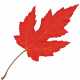 Camp Out : Lakeside Red Leaf
