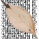 Sweet Autumn Beige Leaf