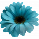 My Life Palette - Realistic Flower (Turquoise)