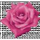 My Life Palette - Realistic Flower (Fuchsia)
