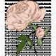 Rose Color Illustration