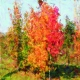 mudsa-magic autumn-pap25