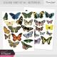 Collage Sheet Kit #2 - Butterflies